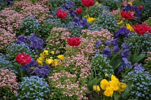 makuramis galerie photos fleurs multicolore parterre. Black Bedroom Furniture Sets. Home Design Ideas